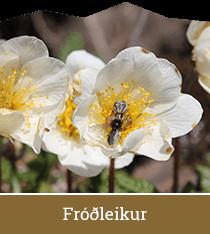 Fróðleikur